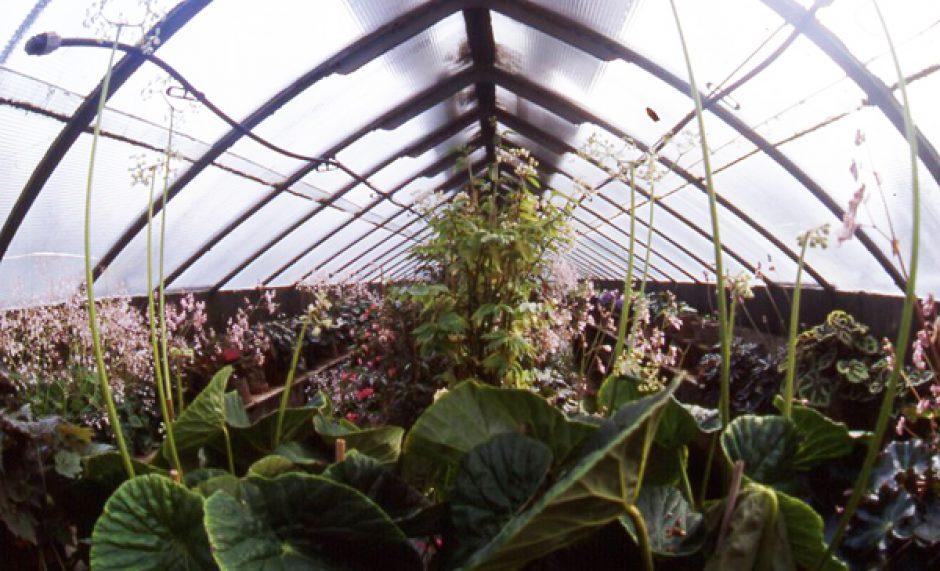 Restauro serre dellorto botanico di firenze concorso art bonus