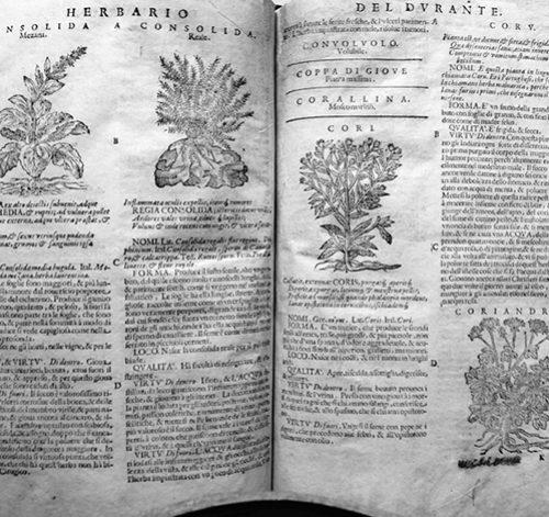 Herbario di Durante Castore (1636) – Jesi