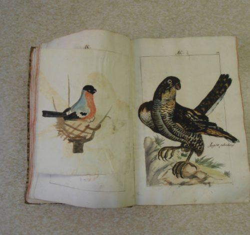 Supplemento alle Lezioni botaniche di Cesare Majoli – Fano