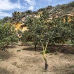 Giardino della Kolymbethra – Agrigento