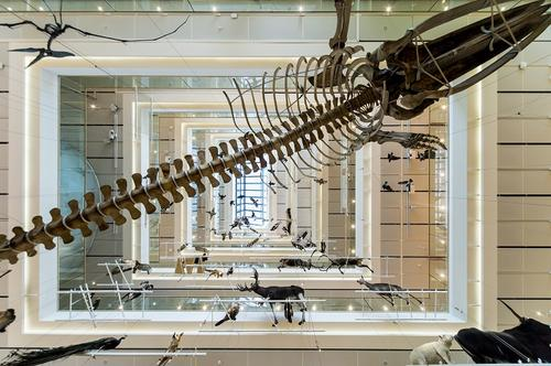 MUSE Museo delle Scienze | Trento (TN)